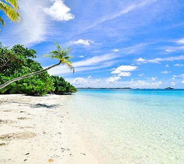 Paradise beach and ocean.