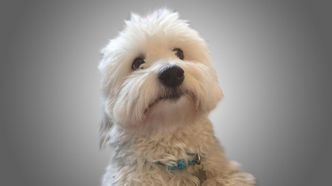 cute dog.